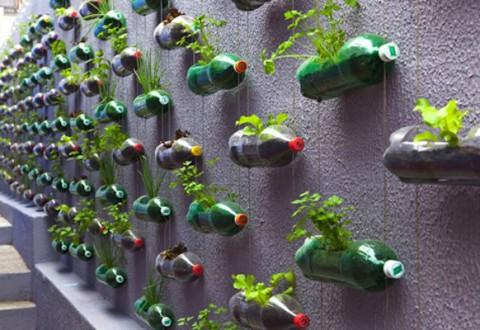 Bottle Garden, Brazil